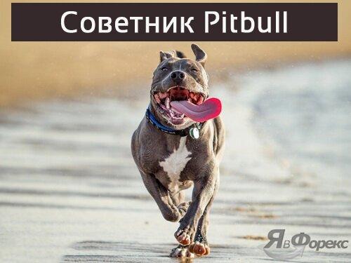 советник pitbull